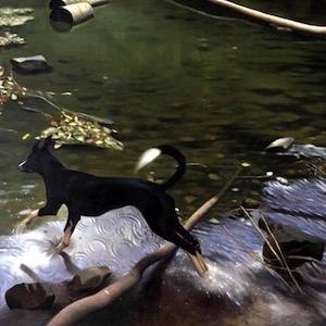 2002 Sally leaps the stream